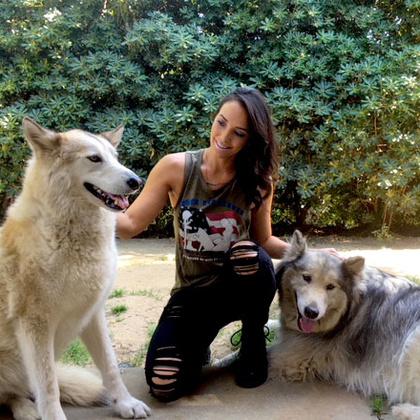 Wolf Momma