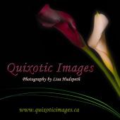 Quixotic Images Calgary