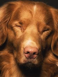 Diggety Dog