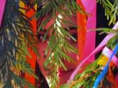 Roxanne DeLovely