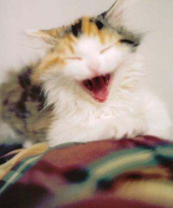 Dayton, OH Jun 03, 2005 Cfaye Abbey Yawning