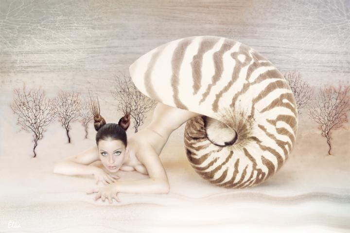 Sep 06, 2005 Elka Snail.