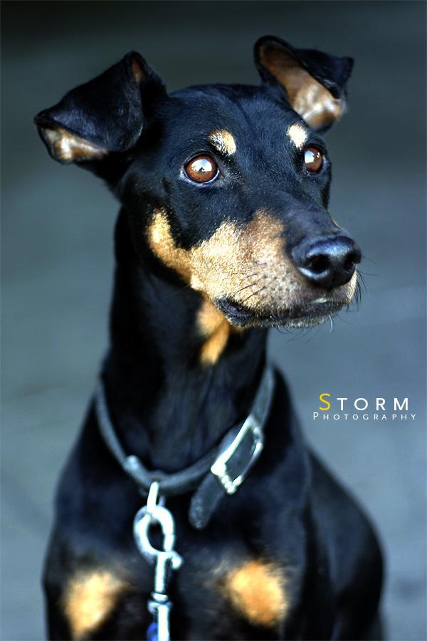 Santa Clarita, CA Dec 25, 2005 2005 Gregory Storm Storm Photography Mascot
