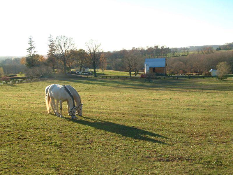 Maryland Oct 31, 2006 Edward Dow Two White Horses