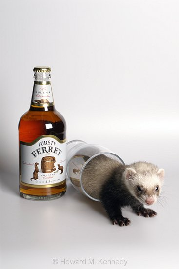 Aberdeen, Scotland Nov 17, 2006 © Howard M. Kennedy A Glass of Fursty Ferret