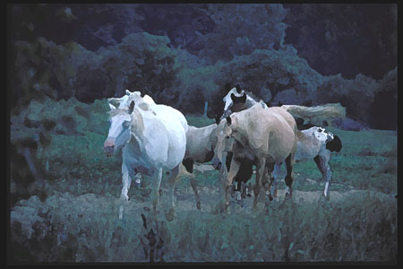 The wilds of western Pennsylvania Jan 27, 2007 1989 pw/gii photographics moes horses coming in for the evening (with some help from photoshop).