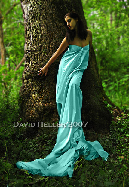 Maryland... Thank You guys for the lists and comments hard to keep track Jun 20, 2007 David Heller 07 An enchanted forest... R.I.P