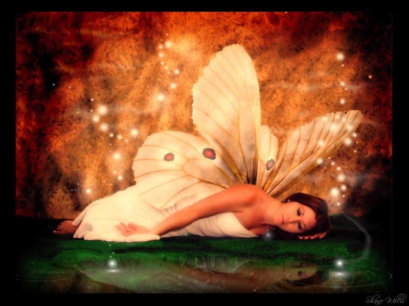 N.C. Aug 19, 2007 Shane ~-Sleeping Fairy~-