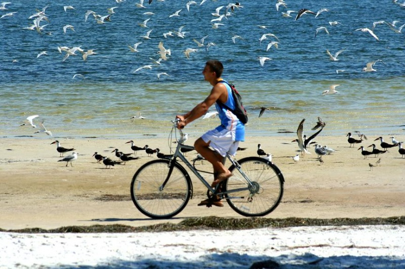 Vinoy Park Beach, St Pete FL. Nov 02, 2007 Photography by Mick The poor guy was just out riding his bike.