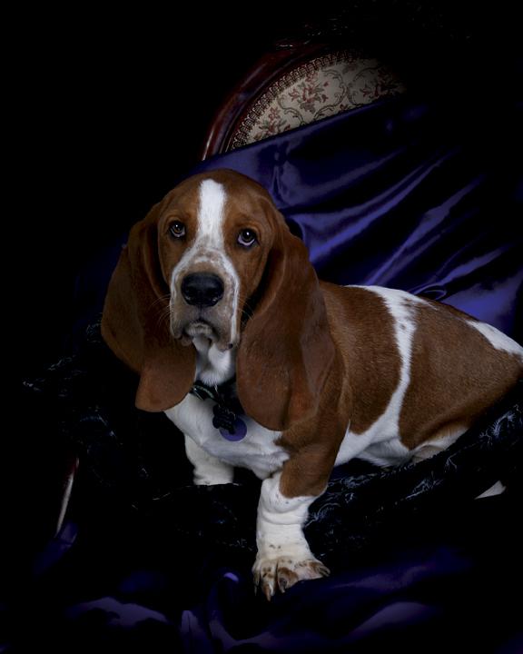 Nashville, TN  (Private Owner) Nov 21, 2007 2007 A Thousand Words Im a gooood dog