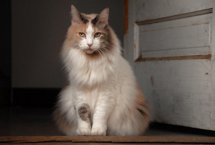 Arlington, Va.  Dec 02, 2007 Scott Dunn R.I.P. Neko. Yeah, I put a cat on here. Dont hate.