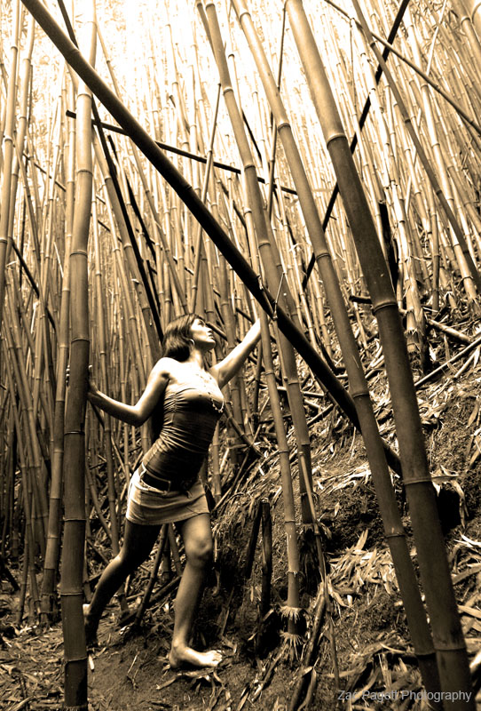 Maui Feb 02, 2008 2007 Zac A Pagett Photography Gina in the bamboo forest