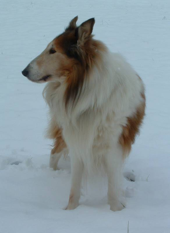 the world needs more collies! Apr 06, 2008 none, put it on your childs wall Robbie, profile in snow
