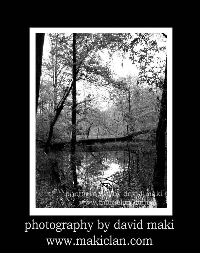 Tallahassee, FL Apr 09, 2008 david maki Florida Swampland (I got eaten alive by mosquitios)