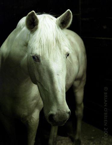 Ontario May 05, 2008 Brian OBrien 2008 Cremello Horse