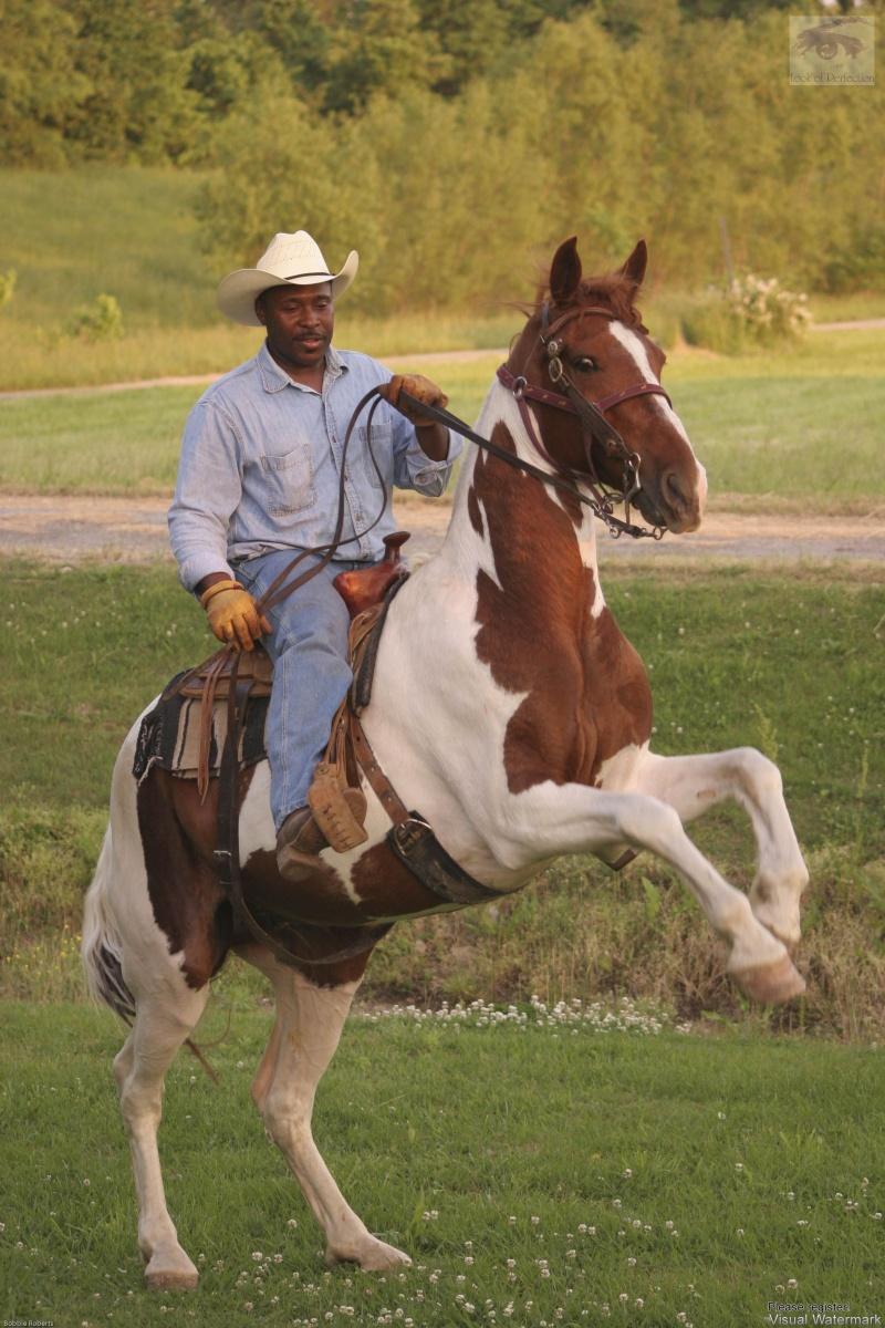 Cario, Il Jul 07, 2008 Bobbie Roberts Tanto rides again