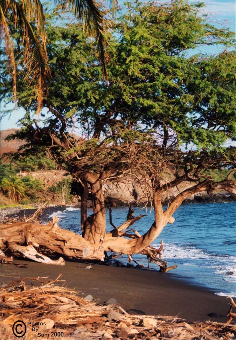 Maui, HI. Sep 29, 2008 Photos By Sam Serenity