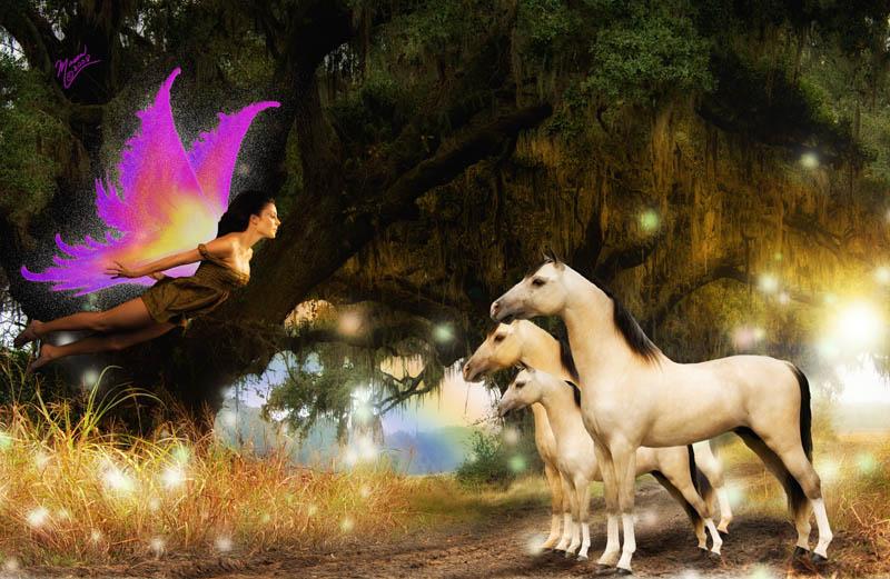 Fairy Forest Nov 17, 2008 Richard Mason, Mason Photography Fairy Forest