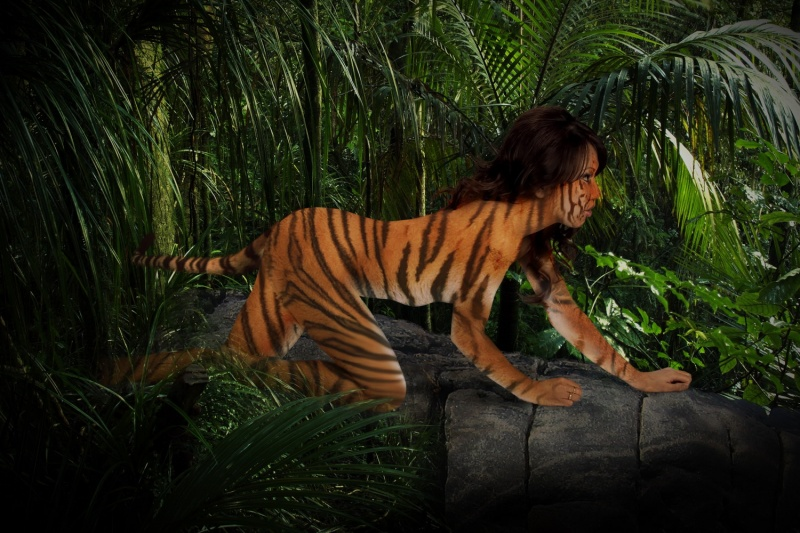 Jan 05, 2009 Robert Odegard Photography Tiger Juliet on the prowl