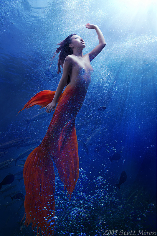 Under The Sea Feb 09, 2009 Scott Miron 2009 The Mermaid