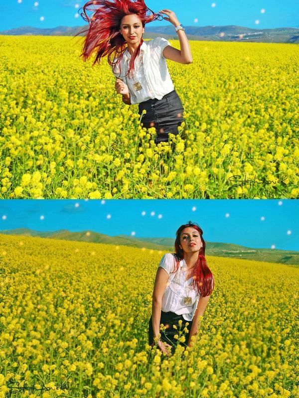 Flower Field Mar 09, 2009 Stephanie K