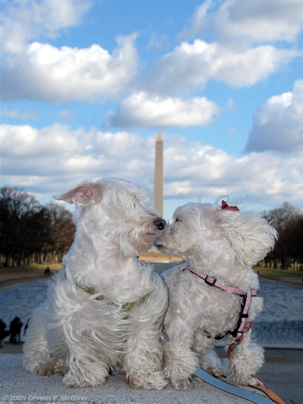 Reflecting Pool, Washington, D.C. Mar 21, 2009 ©2009 Dennis P. McGinn Dr. Suess and Cindy Lou Who at the Lincoln Memorial