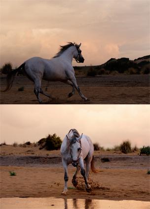 sardinia Apr 16, 2009 yes horse
