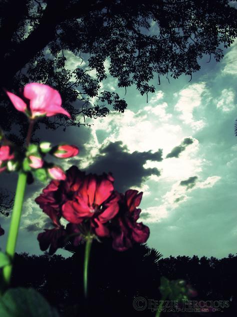 Epcot May 07, 2009 Fezzie Ferocious Floral Escape