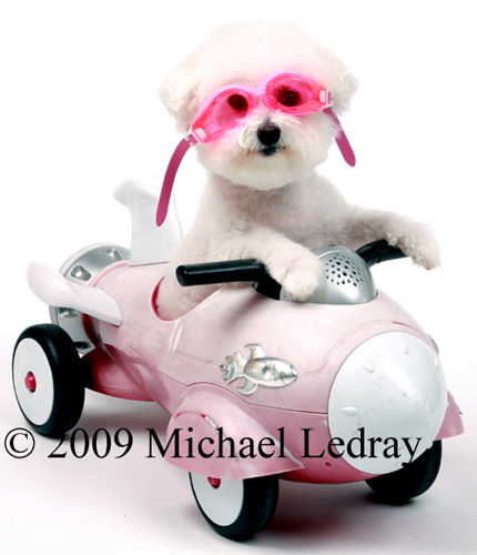 Home Studio May 18, 2009 © Michael Ledray Fifi the Bichon Frise in her Rocket Car!