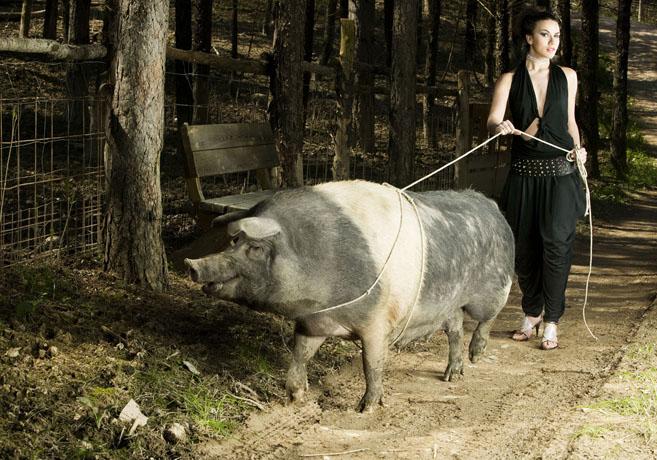 italy Jun 30, 2009 ©2009 tommasomajonchi donne e Maiali / women and Pig
