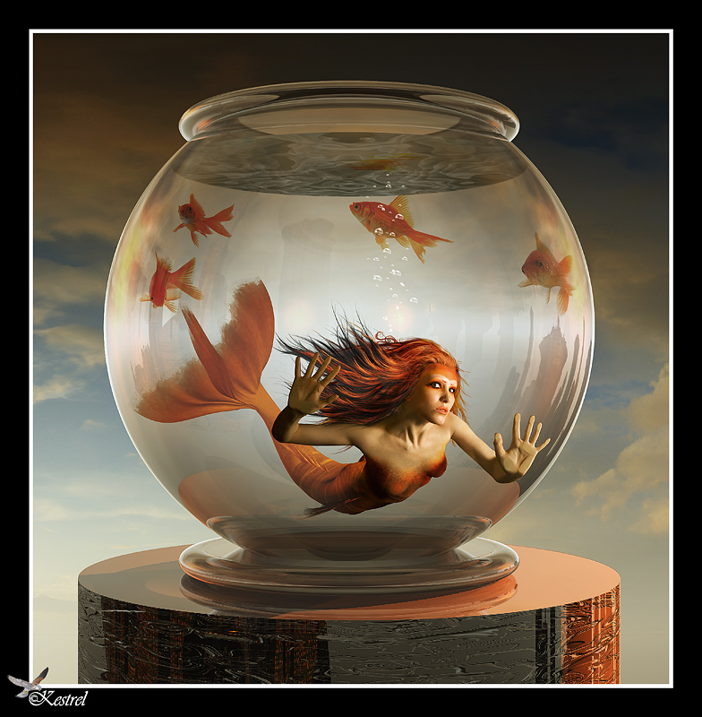 Oct 30, 2009 Ryo - Kestrel Goldfish Mermaid