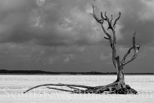 Harbor Island North Eluthera, Bahamas Jan 02, 2010 seanbrewerimages The Lone Tree