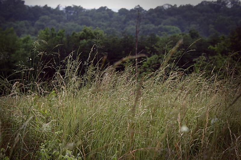 Female model photo shoot of Lexi Bird Photography in West Virginia
