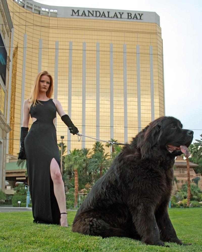 Las Vegas Oct 13, 2010 rbphotos Walk the Dog