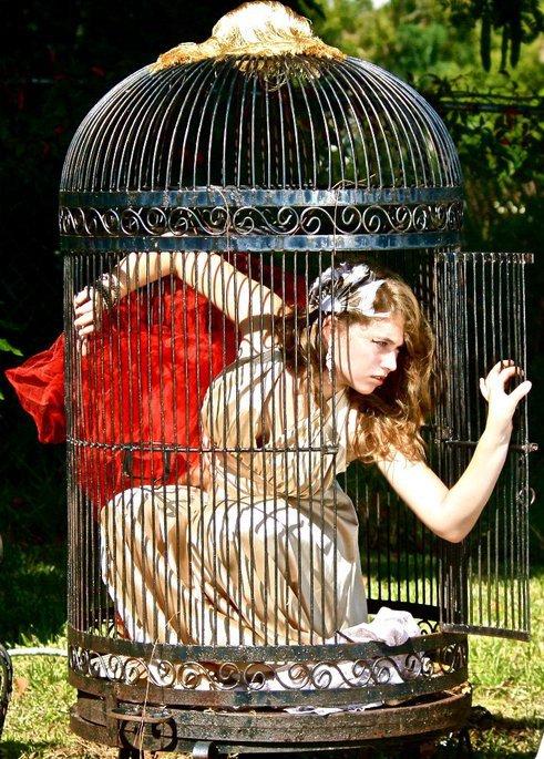 Nov 09, 2010 Birdcage