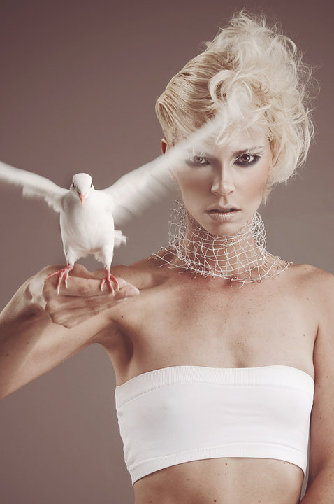 Nov 11, 2010 carol plymill neVer thought id have me a DoVE!