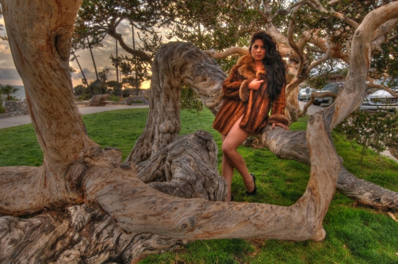 Laguna Beach, California, USA May 10, 2011 HD Photo Tours Jasmine In A Tree At Sunset