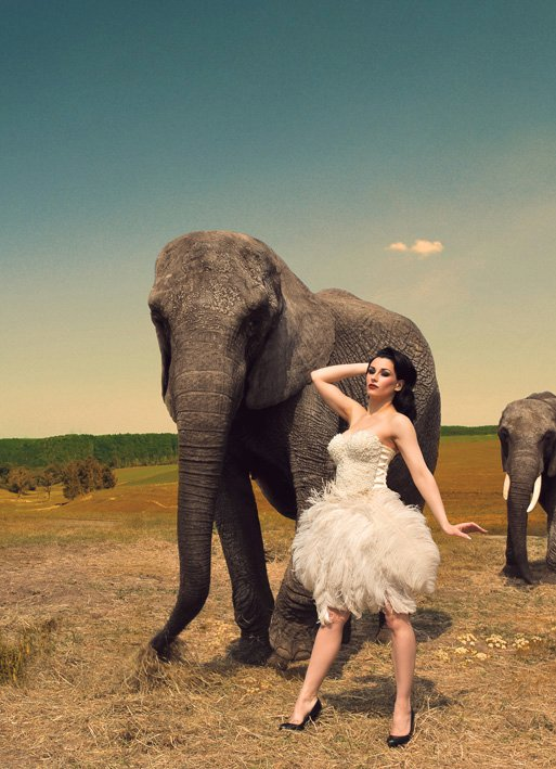 May 12, 2011 photo by torsten solin, elephants by berolina circus :)