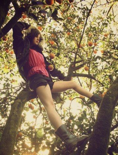 Orange grove Aug 23, 2011 Shayna Graber