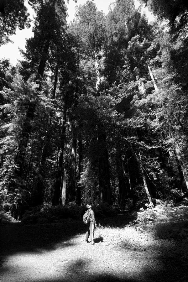 Redwood Forrest National Park CA Aug 09, 2012 COPYRIGHTS © 2015 RESERVED BY AUTHOR J.L. CALLE Redwood Forrest National Park