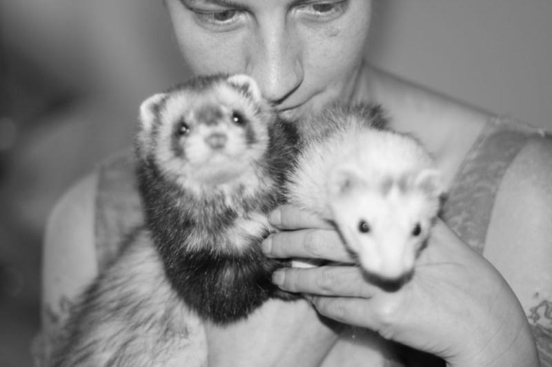 Seattle, WA Aug 20, 2012 Jack Kegley Photography Ferrets!